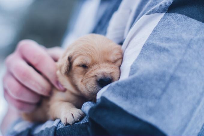 Como se manifiestan las emociones y los sentimientos en las mascotas