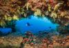 Fotografía submarina.Las mejores imágenes de la década